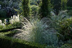 Stipa barbata in the White Garden at Sissinghurst Castle garden