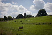 Sheep graze on a hillside outside Chewton Mendip, Somerset. Chewton Mendip is a village and civil parish in the Mendip District of Somerset, England and within the Mendip Hills Area of Outstanding Natural Beauty and the Chew Valley. Wool has for centuries been a source of great wealth to the towns of south-west England whose legacies are the fine country homes of merchants, the churches and cathedrals bestowed on the local communities. Nowadays in ther Mendip Hills, dairy farming has become more lucrative.