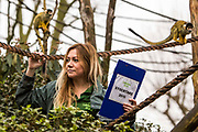 Zoo Keeper Amy Heath counts 20 Spider monkeys. The ZSL London Zoo Annual Stocktake 2015. Responsible for the care of more than 750 different species, keepers face the formidable task of noting every mammal, bird, reptile, fish and invertebrate at the Zoo.