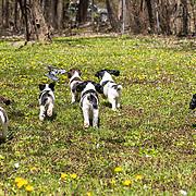 Pups First Field Work