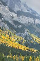 Fall color Banff National Park