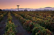 Sunrise in the Carneros Region, Napa Valley, Napa County, California