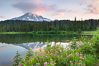 Sunrise over Mount Rainier seen from Reflection Lake, Rosy Spirea (Spirea splendens) is in the foreground. Mount Rainier National Park Washington