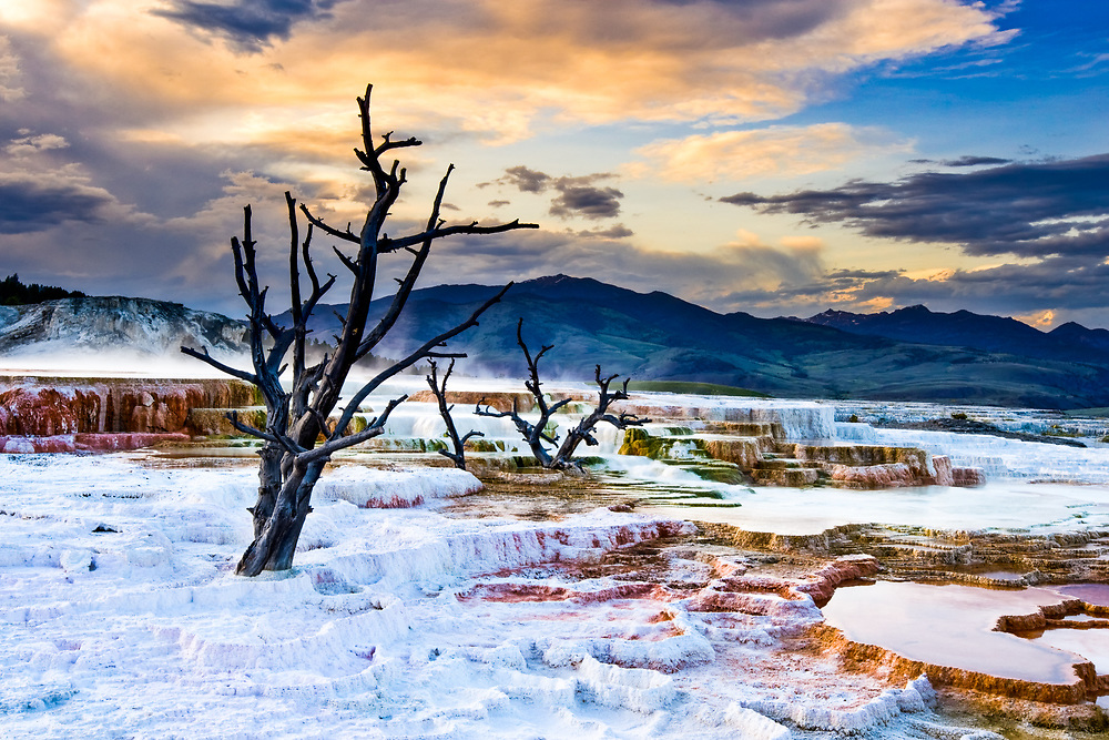 Dead trees highlight sunset over the Mammoth Hot Springs area of Yellowstone National Park in Wyoming.
