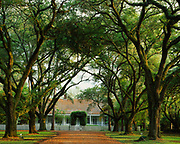 Live oak allee leading to Beau Fort Plantation house, an example of Creole architecture built about 1790, Cane River National Heritage Area, Natchez, Louisiana.
