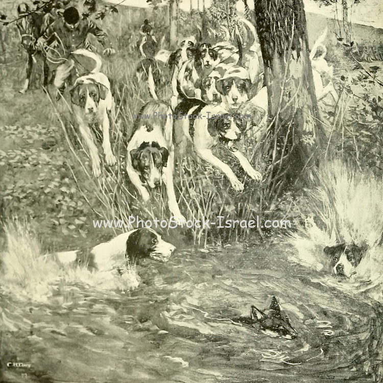The Hounds splash into water From the Book '  Medley of sport ' by Durham, J. M. M. B Published by Gibbings, London in 1910