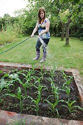 Woman watering sweetcorn  plants with hosepipe