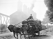 9969-2029. Load of green hops being brought in to the dryers. September 9, 1935.  Riverside Hop farm, owned by A.J. Ray and Son, Inc., Newberg, Oregon.