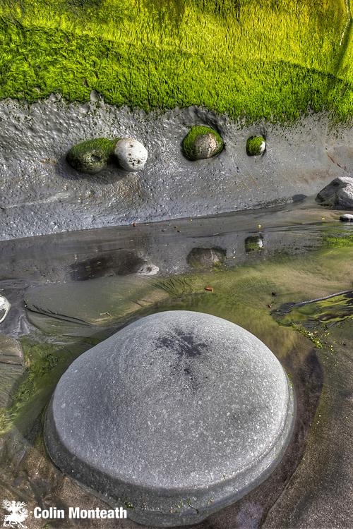 Boulders embedded in algae covered sea cliff, Tongaporutu, North Taranaki
