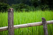 A green rice field, Annapurna Sanctuary, Nepal