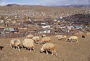 Despite the popular image of Mongolians as nomadic herders, it is an increasingly urbanized country. More than one quarter of Mongolians live in the capital city, Ulaanbaatar. Many people move into the city from the countryside and live in squatter areas on the hillsides around the city, sometimes bringing their animals with them. Mongolia. Material World Project.