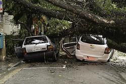 May 19, 2017 - Devido as chuvas uma árvore caiu na tarde desta sexta-feira (19), em três carros e uma moto na Rua Itapeva, região central da capital paulista. Ninguém se feriu. (Credit Image: © Tom Vieira Freitas/Fotoarena via ZUMA Press)