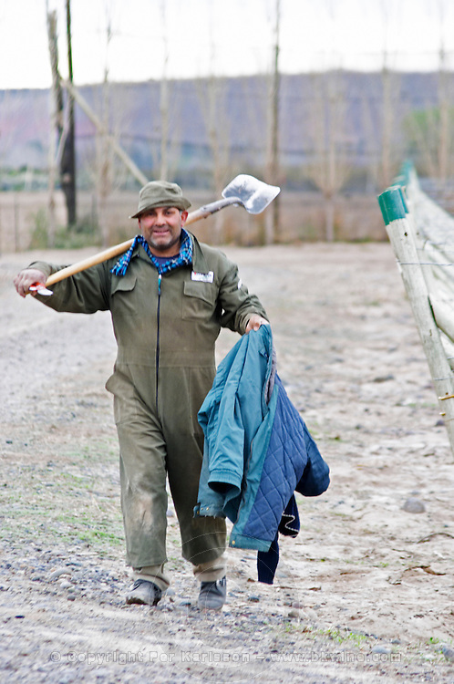 A smiling vineyard worker walking to the lunch brake with a spade on the shoulder Bodega Del Anelo Winery, also called Finca Roja, Anelo Region, Neuquen, Patagonia, Argentina, South America