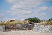 Fences at East Beach