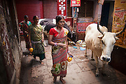 Women passing by a cow in one of Varanasi's backstreets in the Old Town.