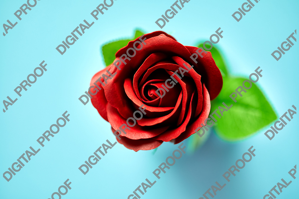 Minimalistic of an artificial red rose image photographed in studio isolated on blue background