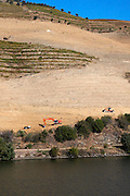 douro river and steep vineyards building terraces douro portugal