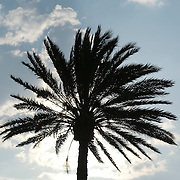 Silhouetted palm tree against sky
