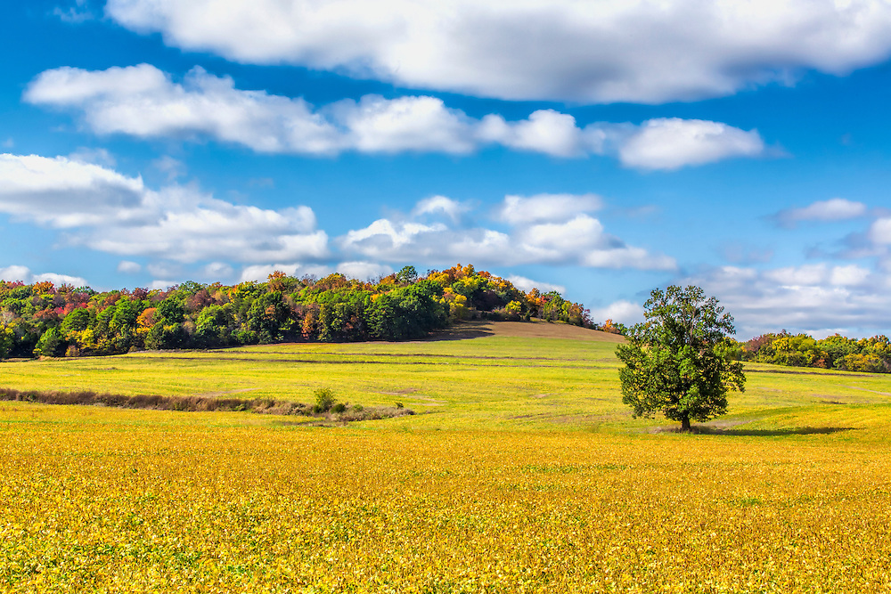 Autumn Colors Begin To Frame Country Scenes In New Melle, Missouri