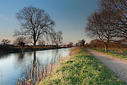 Evening view of Bridgwater and Taunton Canal, close to sunset, with the canal and path converging in the distance and a tree reflection in the water.