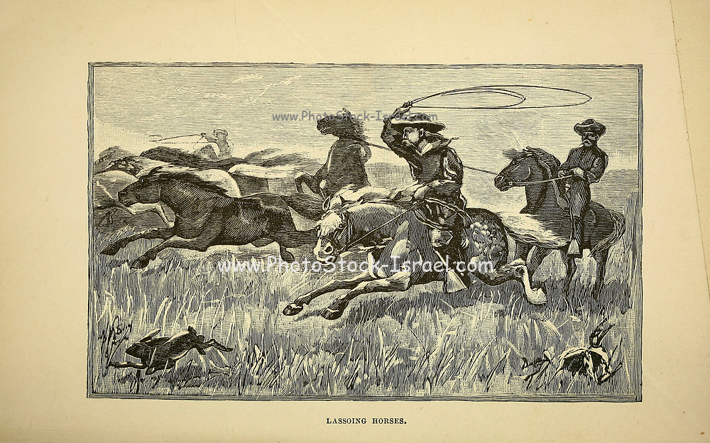 Lassoing horses from The beef bonanza; or, How to get rich on the plains. Being a description of cattle-growing, sheep-farming, horse-raising, and dairying in the West by General Brisbin, James S. (James Sanks), 1837-1892. Published in Philadelphia, USA in 1882
