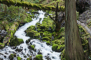 Wahkeena Creek flows trhough green mossy rocks in Columbia River Gorge National Scenic Area, Oregon, USA.