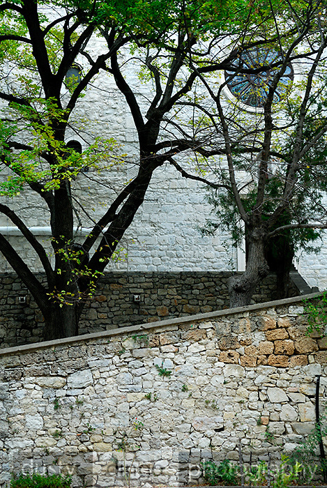 Stone walls, trees and rose window. Krka Franciscan Monastery, island of Visovac, Krka National Park, Croatia