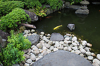 Koi ponds are ponds used as part of a landscape pond garden. Classic koi ponds have Nishikigoi Japanese ornamental carps. The design of the koi pond has a great effect on the well-being of the carp.