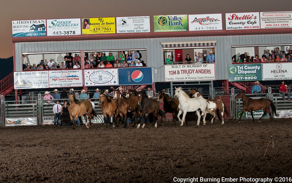 The Kesler bucking horses run the arena in memory of Greg Kesler at the Last Chance Stampede Helena MT July 30th 2016.  Josh Homer photo.  Photo credit must be given on all uses.  www.burningemberphotography.com