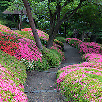 Happo-en Garden was built in the early seventeenth century in Tokyo. In 1915 Fusanosuke Kuhara revised the garden for his personal retreat.  It is now the site of a famous wedding banquet hall, though the garden has been preserved as a photo op backdrop for wedding couples.