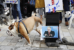 "© Licensed to London News Pictures. 07/10/2018. London, UK. A Pro-Remain dog takes a wee on a post with a photo of Boris Johnson as dog owners march on parliament to demand a ""People's Vote"" on the final Brexit agreement. Photo credit: Peter Macdiarmid/LNP"