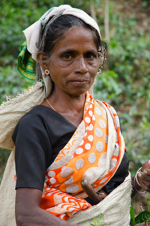 Portrait of a Tamil woman near Ella, Southern Highlands, Sri Lanka