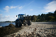 A tractor collects seaweed along the beach near Landskrona, Sweden 30th of August 2016. The winds have been blowing for a few days and seaweed has piled up along the coast line. This stretch of beach is just below Borstahusen camp site and work is put in to keep the coast clear.
