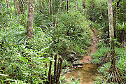 View of tropical rainforest, Masoala National Park, Madagascar, largest of the island's protected areas, UNESCO World Heritage Site, Masoala peninsula is exceptionally diverse due to its huge size, and variety of habitats