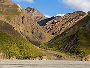 A side canyon with yellowish rock meets Tokat River gravel, in Denali National Park, Alaska, USA.