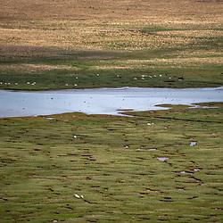 Paisagem com ovelhas (registro) fotografado na Escócia, na Europa. Registro feito em 2019.<br /> ⠀<br /> ⠀<br /> <br /> <br /> <br /> <br /> ENGLISH: Landscape with sheep photographed in Scotland, in Europe. Picture made in 2019.