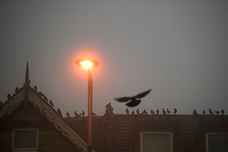 © Licensed to London News Pictures. 22/12/2016. London, UK. Pigeons perch on a rooftop at dawn in thick fog in Ealing, West London on a cold winter morning. Temperatures over the upcoming Christmas period are expected to be unusually warm. Photo credit: Ben Cawthra/LNP