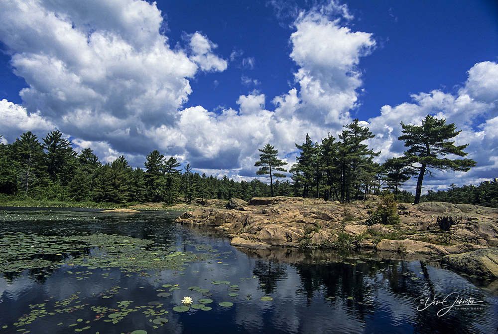 Lighthouse Pond and water lilies with summer clouds, Killarney PP, Ontario, Canada