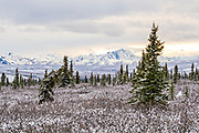 An early season snow across the Alaska Range of mountains at sunset in Denali National Park, McKinley Park, Alaska