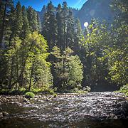 A river and trees are seen inside Yosemite National Park on Sunday, September 22, 2019 in Yosemite, California. (Alex Menendez via AP)