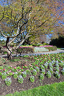 Spring annuals freshly panted in the flower beds at Queen Elizabeth Park in Vancouver, British Columbia, Canada