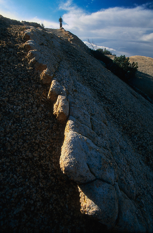 Sidelit granite, evening, March, Joshua Tree National Park, California, USA.