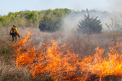 New growth after controlled burn on the Matthews Prairie, owned by the Native Prairies Association of Texas. Farmersville, Texas, USA.