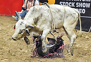 J.W. Harris of Goldthwaite, Tx., hits the ground under his bull during the Xtreme Bulls event Saturday at the San Antonio Stock Show and Rodeo. Contestants were vying for their share of a $100,000 purse.