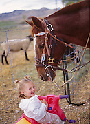 """Chubs"" checking out two-year-old Shandi Syrett, Tropic, Utah.  MR"