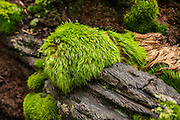 Mossy logs along the trail.