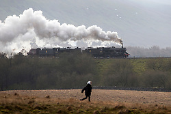 © Licensed to London News Pictures. 23/01/2016. Ribblehead UK. Photograph show a child running after two historic Black 5 locomotives pulling the Cumbrian Mountain express train over the Ribblehead Viaduct making it the first steam train of the year to travel over the historic viaduct.Photo credit: Andrew McCaren/LNP