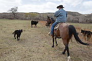 """CREDIT: Steven St. John for The Wall Street Journal<br /> """"ANIMAS""""<br /> <br /> Rancher Lin Blancett, whose cows had to be evacuated because of the Gold King Mine spill, rides threw his heard checking on new born caves on Tuesday, March 22, 2016"""