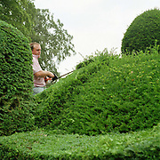 Head gardener Andrew Meadowcroft trims the topiary hedges at Newburgh Priory in Coxwold, North Yorkshire, UK. The English Yew clippings are collected and used to make chemotherapy drugs Paclitaxel (Taxol) and Docetaxel (Taxotere) for treating various types of cancer. Coxwold village is in the Howardian Hills AONB, a landscape with well-wooded rolling countryside, patchwork of arable and pasture fields, scenic villages and historic country houses with classic parkland landscapes.