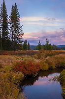 The soft purple colors of sunset are reflected in Pack Creek, Idaho. The red bush was one of many vibrant fall colors visible across this meadow. Normally home to moose, bears, and wolves, it was unusually quiet on this evening. In September of 1805 Lewis and Clark set up camp here before nearly starving to death in the mountains further west. Over 200 years later, it's still a great place to camp.
